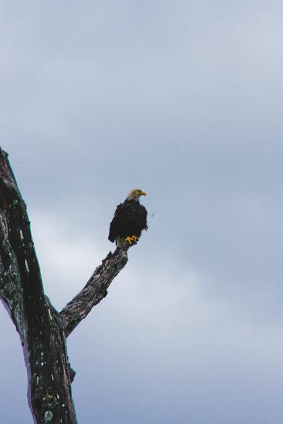 Nature from Alaska Photograph 21