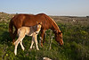 Foal and it's mother 2
