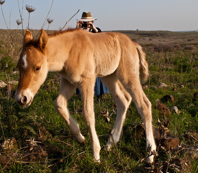 Photographing the foal