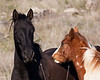 Black horse and brown-white horse