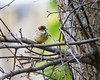 Bird in a tree-2