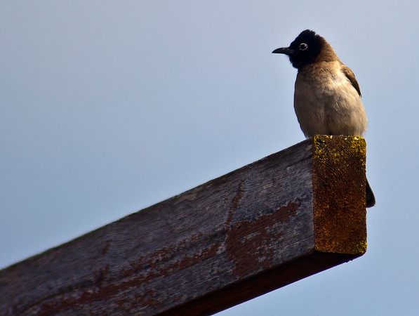 Bird on a rafter