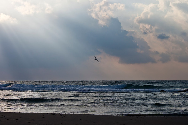 Seagull flying into sun rays on beach