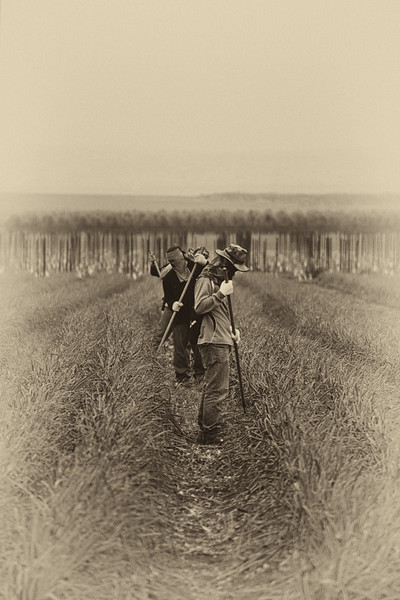 Working in the fields of the Golan - sepia