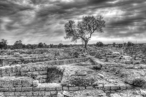 Caesarea - Tree in the Ruins - B-W
