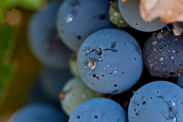Grapes and droplet - macro
