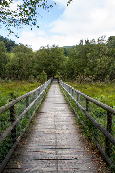 Wooden pathway into the trees - Glendalough