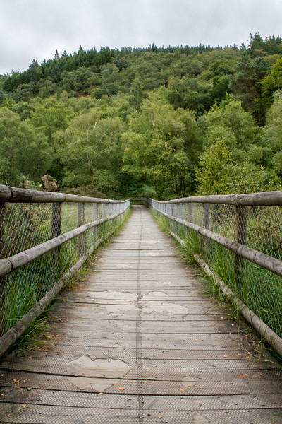 Wooden pathway into the trees - Glendalough - lower angle