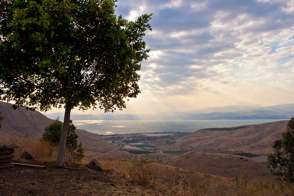 View to the Kinneret - behind tree