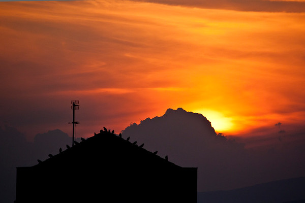 Birds on roof silhoutte at sunset - Katzrin