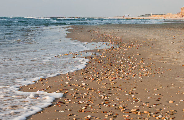 Seashore with shells
