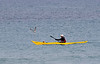 Meeting - Kayak and seagull
