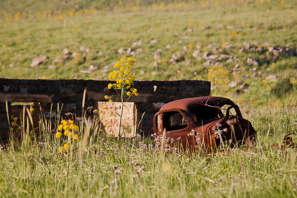 Rusty car in a field