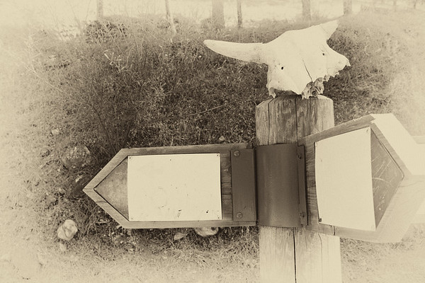 Skull on a sign-post
