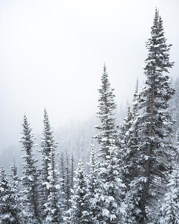 Highlands Trees