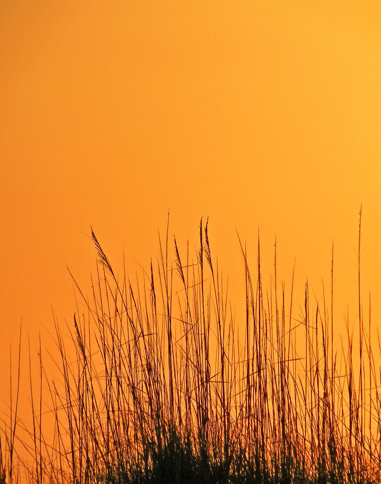 beach-reeds5378