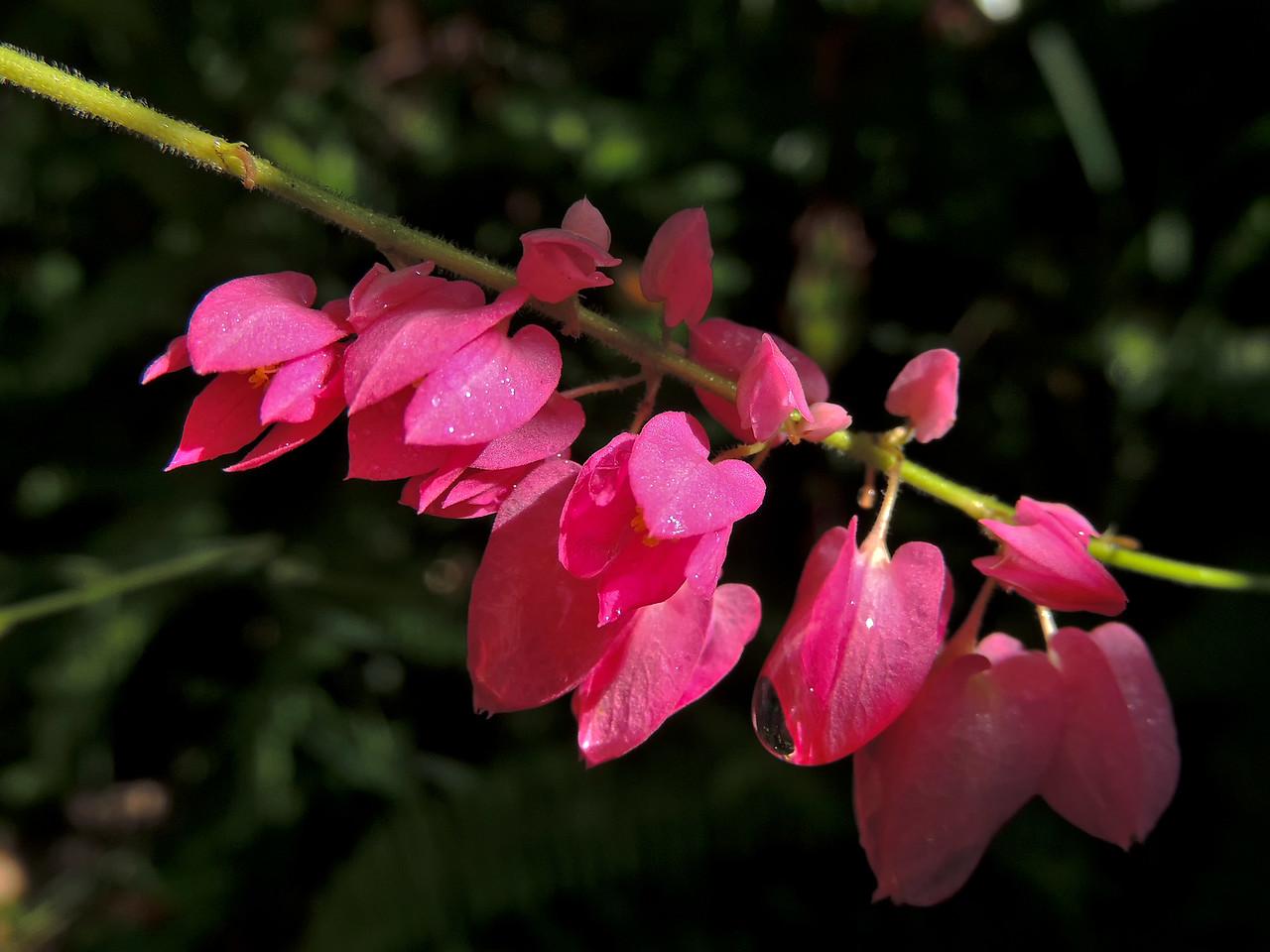 flower0330