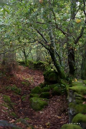 Trilho das Terras de Granito (PR4 - Águeda)