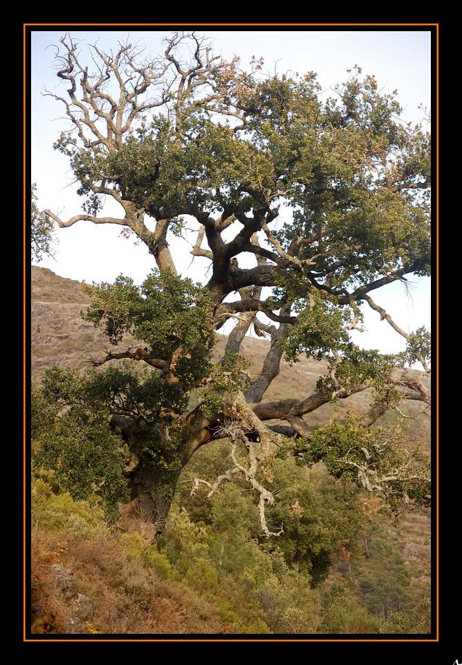 de Regoufe a Drave 2008-04-05DSC_5981