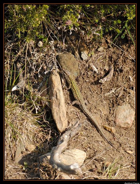 de Regoufe a Drave - 05-04-2008 - 5922