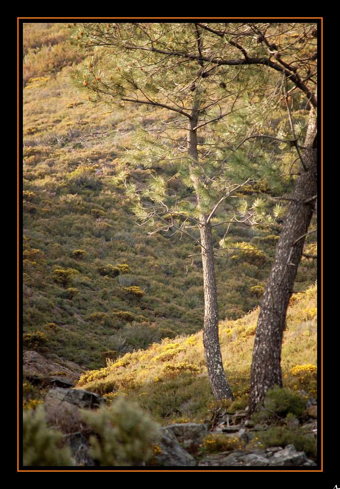 de Regoufe a Drave 2008-04-05DSC_5951