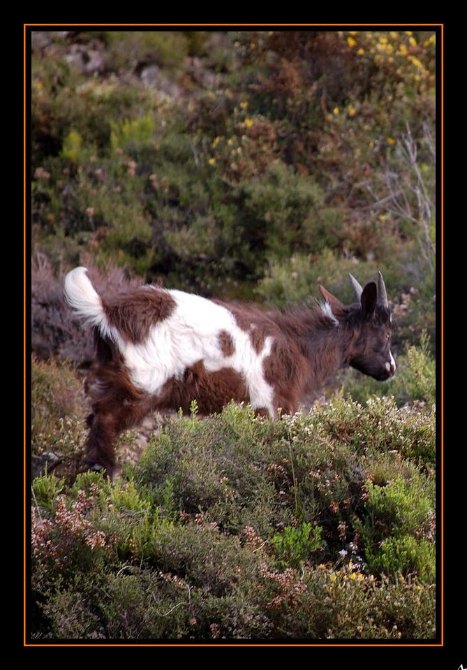 de Regoufe a Drave 2008-04-05DSC_5906_1