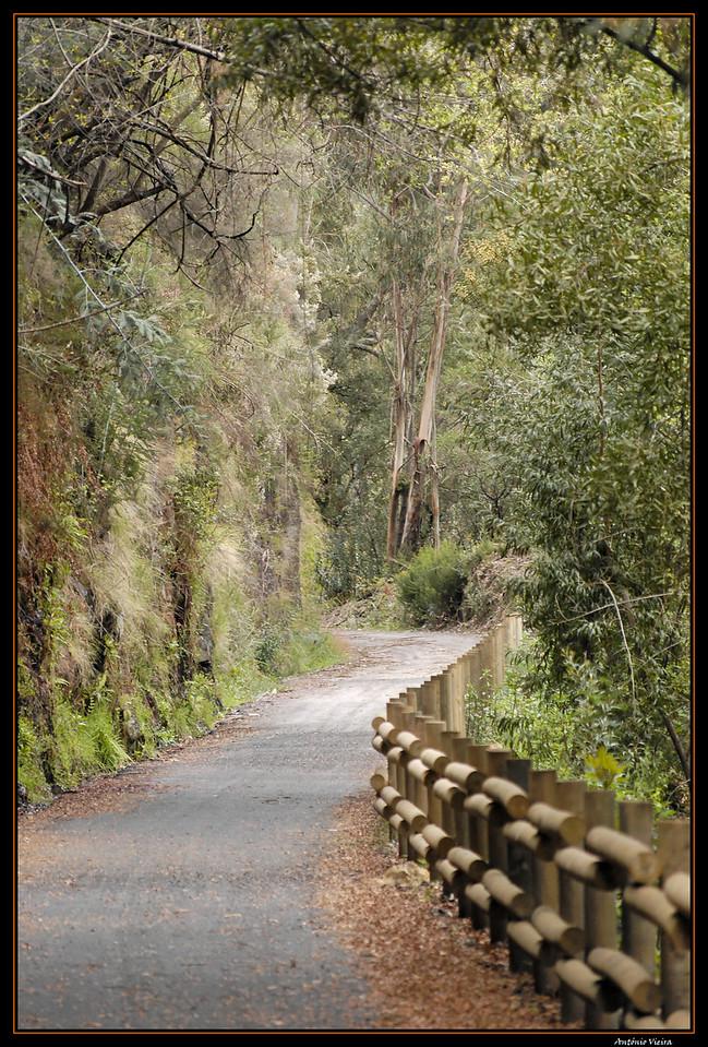 Vouga - Percurso na antiga linha de caminho de ferro