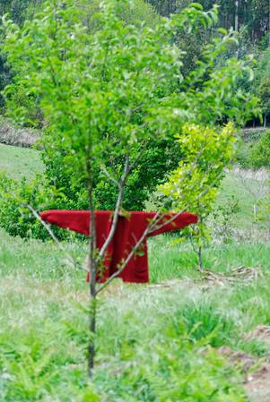 Caminho de xisto das aldeias de Gois -20090509  -  0184
