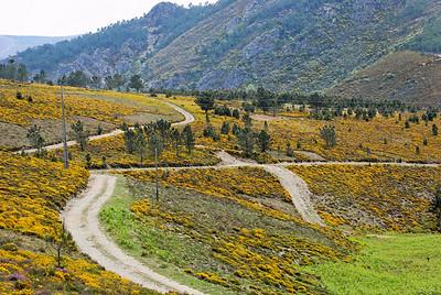 Caminho de xisto das aldeias de Gois -20090509  -  0121