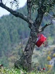 Caminho de xisto das aldeias de Gois -20090509  -  0179