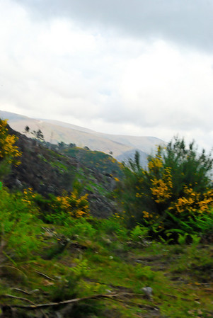 Rota das betulas - S  Pedro so Sul  -20090524  -  1129
