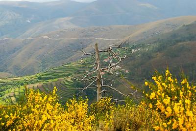 Rota das betulas - S  Pedro so Sul  -20090524  -  1122
