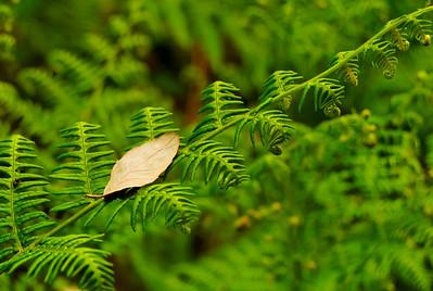 Rota das betulas - S  Pedro so Sul  -20090524  -  1162