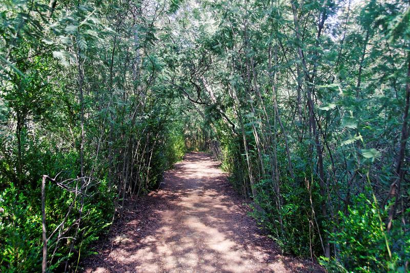 PR2 - Sever Vouga - Cabreia e Minas do Braçal - 20100328 - 6573_raw