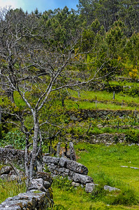 Vouzela-PR2 - Um Olhar sobre o Mundo Rural - 17-05-2008 - 7409