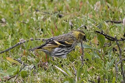1.1.Pássaros Março 2008