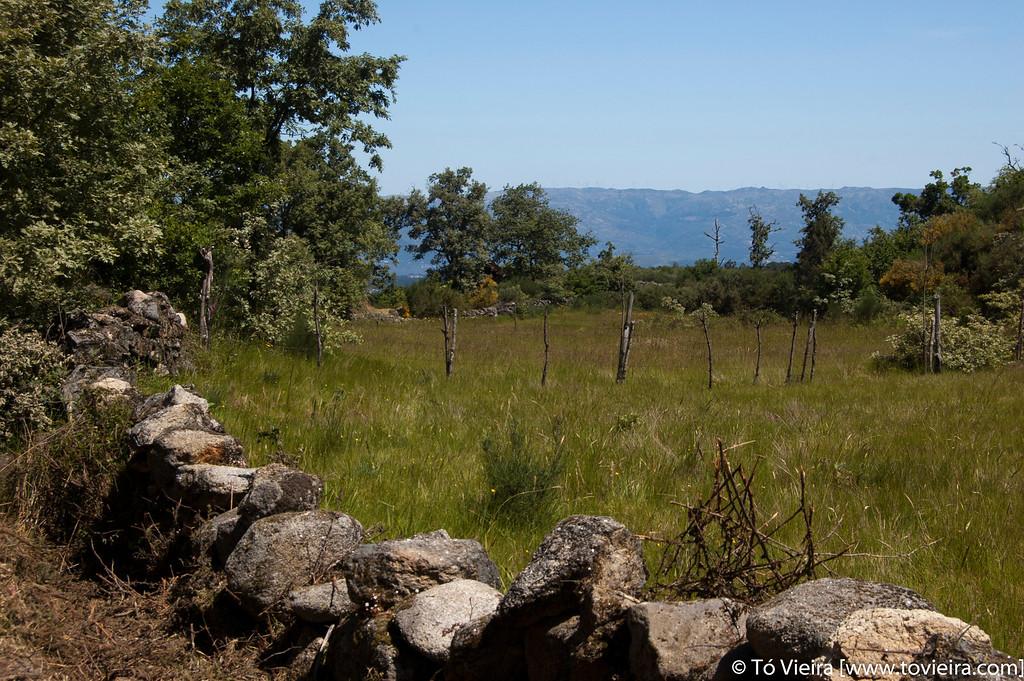 PR9 - trilho Quercus robur