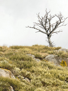 pela Serra do Caramulo
