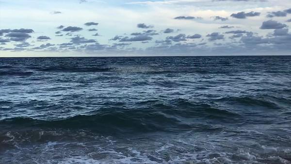 Beach mullet