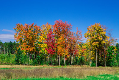 Fall in the UP Forest