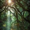 Sunbeams on Roberts Ridge Trail - Roberts Regional Recreation Area, Oakland Hills, CA.