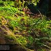 Cataract_Falls_Trail_Mt_Tamalpias_004_20120303