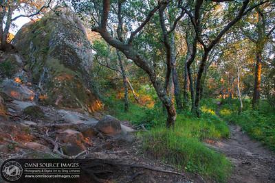 Mt Diablo - Rock City Trails