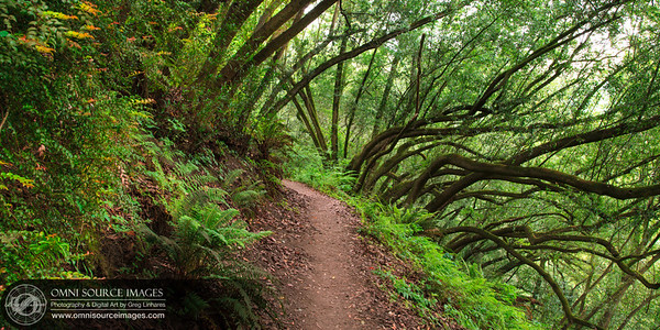 Huckleberry Trail - Oakland Hills, CA.