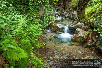 Matt Davis Trail Mt Tamalpias Mini Creek Falls (Landscape Orientation)