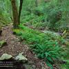 Cataract_Falls_Trail_Mt_Tamalpias_003_20120303