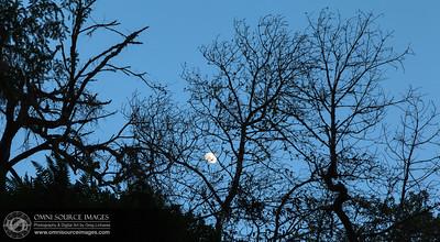 Waxing_Gibbous_Moon_Mt_Tamalpias_20120303