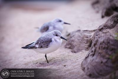 007_Monterey_Bay_Aquarium_2012-02