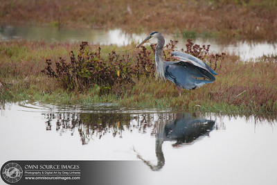 120923_1501_Blue_Heron_Point_Reyes