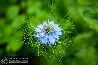 Green Gulch Zen Garden Flower, Muir Beach, CA